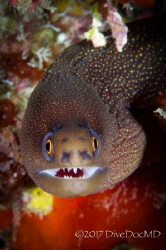 Smiling moray by Lowrey Holthaus